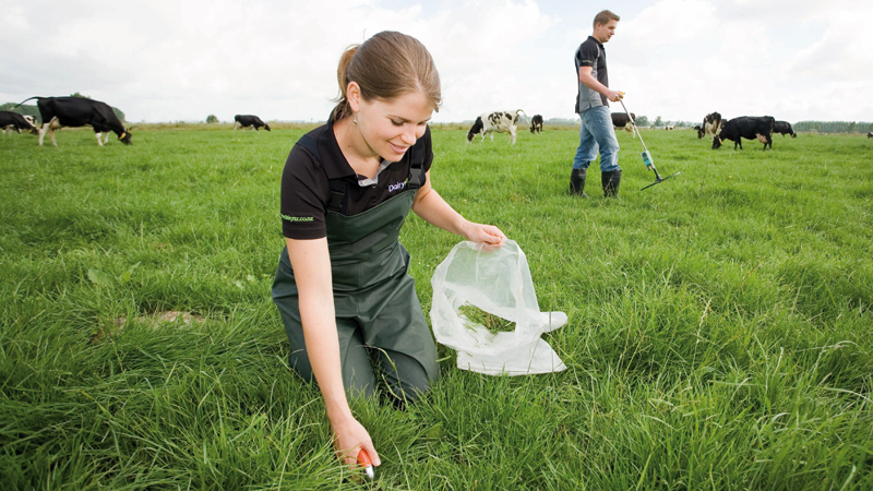 DairyNZ Scholarships