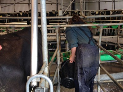 A DairyNZ technician collects and measures leftover supplement.