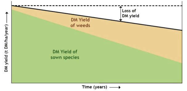 Pasture DM yield over time