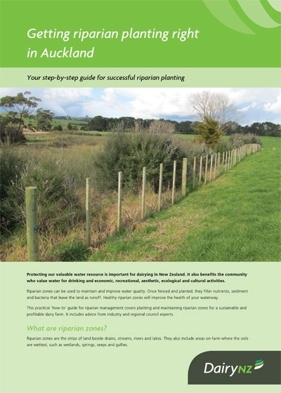Getting riparian planting right in Auckland