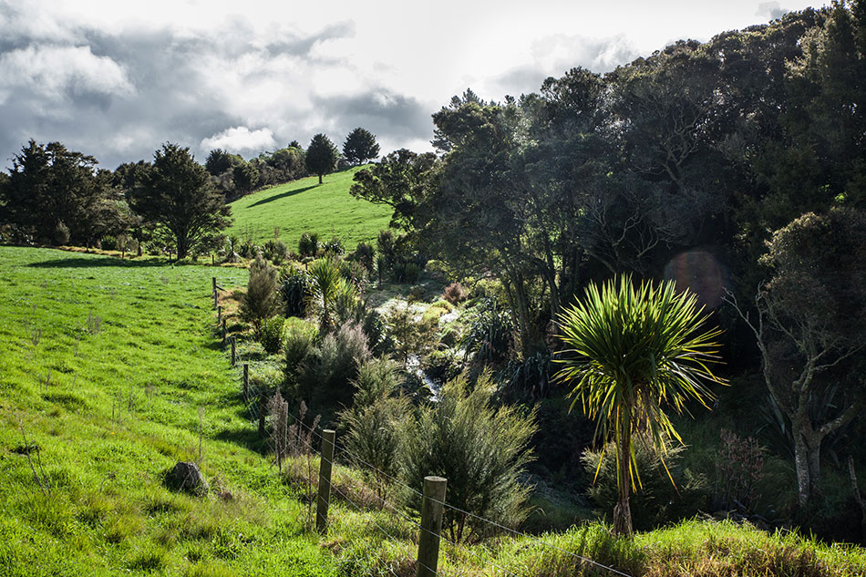 Riparian fencing and planting on a Northland dairy farm.