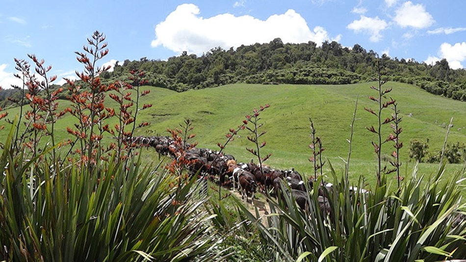 Climate change - DairyNZ