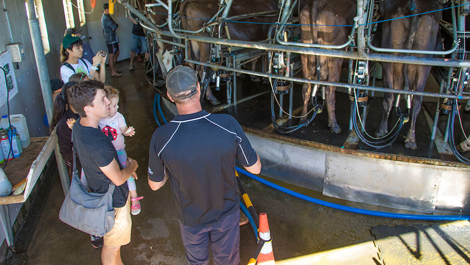 Doug Storey from Owl Farm talks to visitors about the milking process.