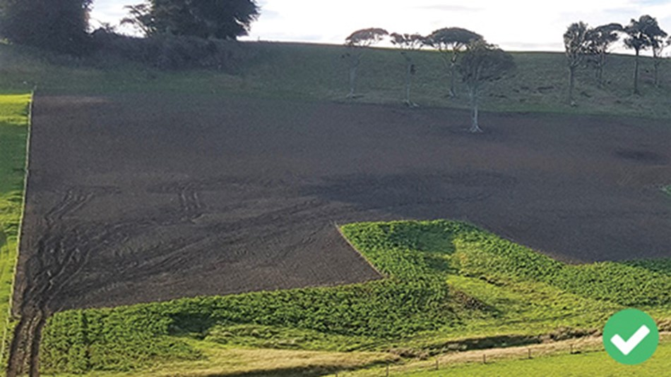 Critical source area left uncultivated. In this picture, the crop is acting as a buffer and will be grazed at the end of winter in dry conditions.