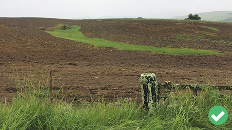 Critical source area left uncultivated and ungrazed.